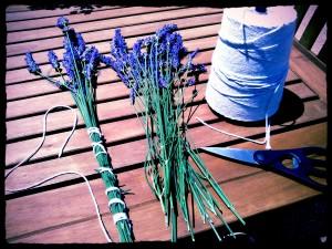 lavenderbound1