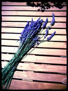 lavendercut